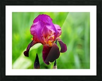 Bold And Beautiful Picture Frame print