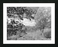 DSC01173 Picture Frame print