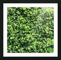 Grassy Wonderland Picture Frame print