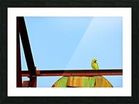 Bird 3 Picture Frame print