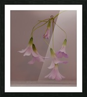 Pretty in pink Impression et Cadre photo