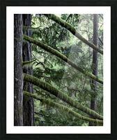 Rainforest Impression et Cadre photo