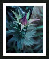 Funky flora Impression et Cadre photo