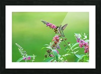 Jewel In The Garden Picture Frame print
