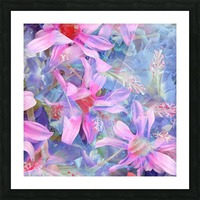 blooming pink and blue daisy flower abstract background Picture Frame print
