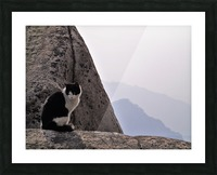 Mountain Cat Picture Frame print