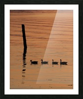 Ducks in a row Picture Frame print