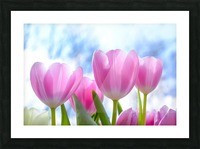 nature, tulip, flora, flower, summer, bright, petal, season, color, floral, growth, blooming, freshness, Picture Frame print