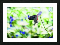 Black & Red Butterfly Picture Frame print