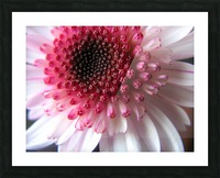 Floral Delicacy Picture Frame print