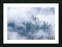 FOREST IN THE CLOUDS Picture Frame print