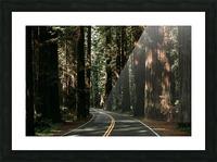 Avenue of the Giants Impression et Cadre photo