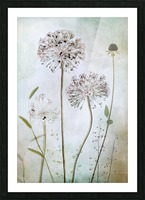 Allium Picture Frame print