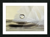 Feathers drop Picture Frame print