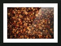 Feuilles mortes Impression et Cadre photo