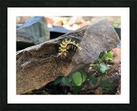 Caterpillar Picture Frame print