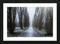 Symetric walk path in fog Picture Frame print