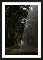 Cypress Tree Tunnel California Impression et Cadre photo