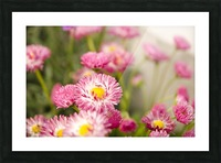 Blooms in the Garden Picture Frame print