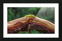 Knot a knee Impression et Cadre photo