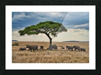 DSC02636 Picture Frame print