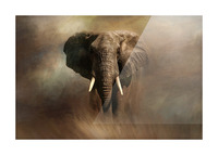 African Elephant Picture Frame print