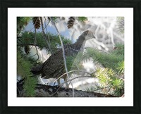 ruffed Picture Frame print