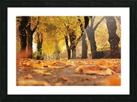 JPT 5921W Picture Frame print