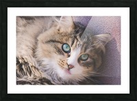 March Cat Picture Frame print