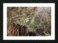 Angry Mockingbird 4 Picture Frame print