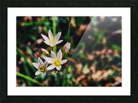 Flowers 2 Picture Frame print