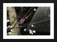 Pink Blossoms Picture Frame print