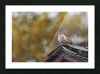DSC_0026 Picture Frame print