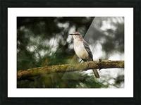 Mockingbird Picture Frame print