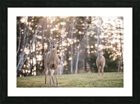 In the field Picture Frame print