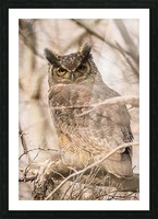 Great horned Picture Frame print