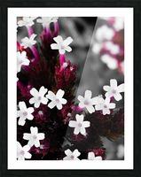White bloom Impression et Cadre photo