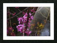 Pink Trees Picture Frame print