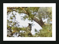 Baby Eagle Picture Frame print