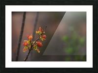 orange blossoms Picture Frame print