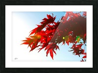 Chinese Maple Picture Frame print