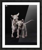 Elf Sphinx kittens Picture Frame print