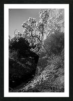 20190316 DSC_0136 2 Picture Frame print