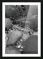 Spiderweb Raindrops B&W Picture Frame print
