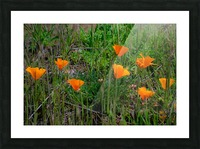 20190331 DSC_0762 Picture Frame print