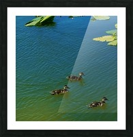 20190406_150448 Picture Frame print