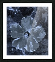 Screenshot_20190106 182135_Gallery Picture Frame print
