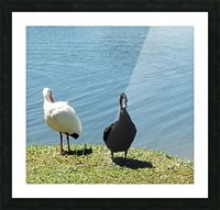 20190406_145356 Picture Frame print