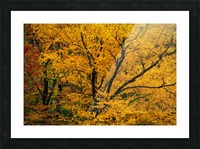 Yellow Tree Leaves Picture Frame print