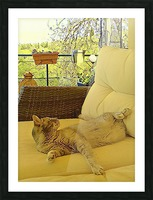 Lounging Around Picture Frame print